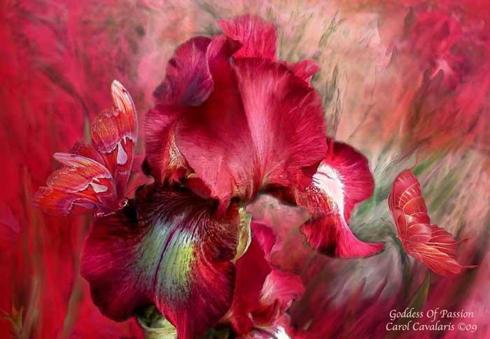 Язык цветов Carol Cavalaris