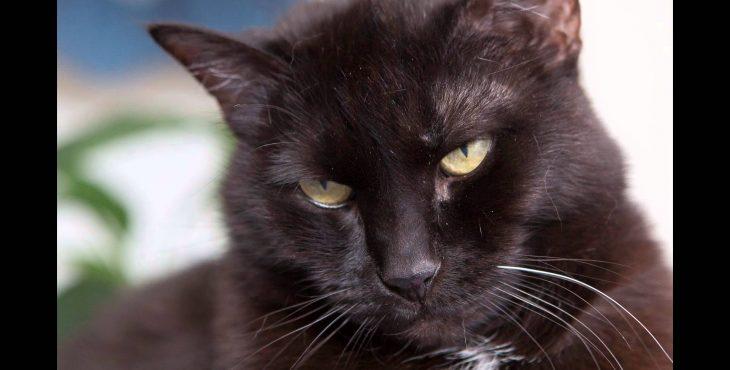 Кошачьи паразиты могут сделать людей более предприимчивыми