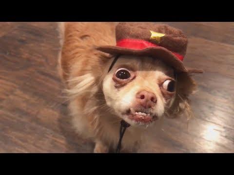 ПРИКОЛЫ ПРО ЖИВОТНЫХ СМЕШНЫЕ ЖИВОТНЫЕ НА ВИДЕО ПОДБОРКА ПРИКОЛОВ Funny Pets Video
