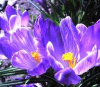 Какие цветы лучше посадить в саду и на даче: общие советы и рекомендации