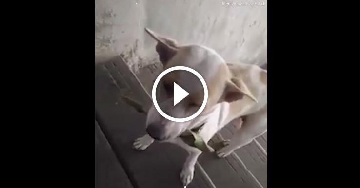 Бездомный пес всегда приносит подарки женщине, которая его кормит