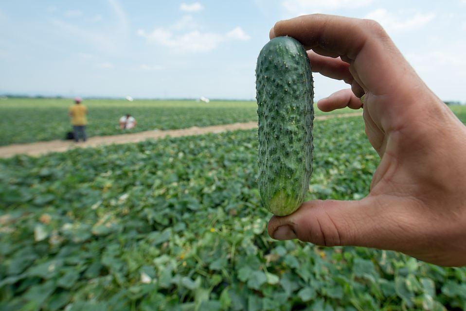Как спасти урожай в дождливое лето?
