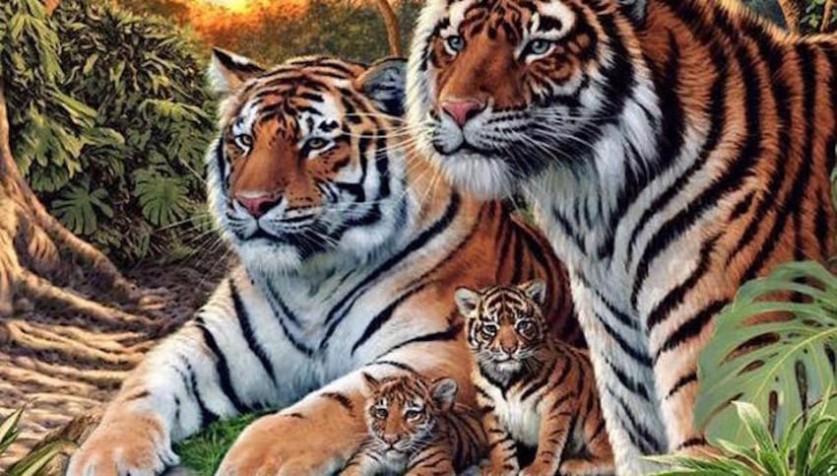 Картинка-загадка: сколько тигров здесь спряталось?