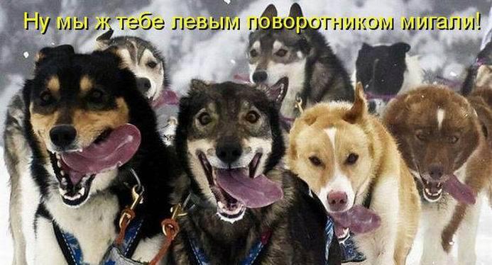 Уфф!!! Ну наконец-то! Котоматрицы великолепные, каждая с доброй улыбкой!!!