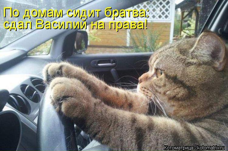 """РАЗВЕСЁЛАЯ """"КОТОМАТРИЦА"""" НА ПЯТНИЦУ!!!"""