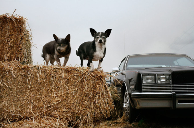 Бриби (21 год) и Нуни (19 лет) собаки, фото собак, фотографии животных