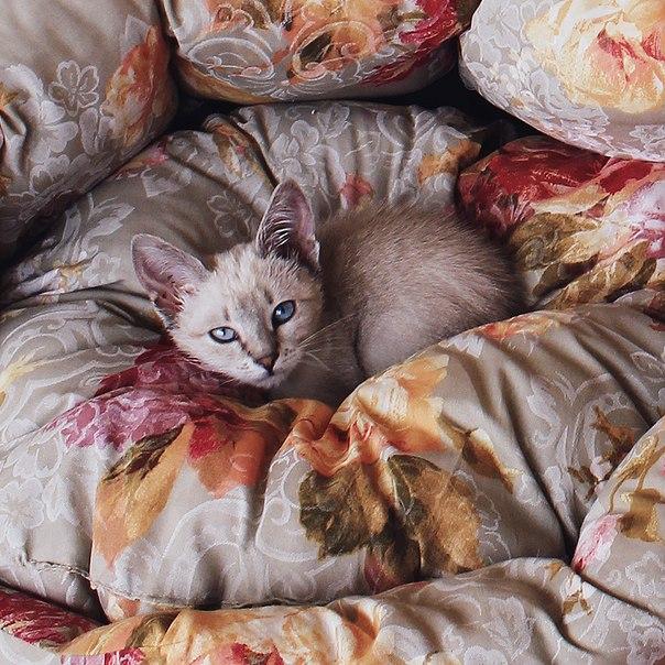 """Мои любимые коты и кошки в день, когда подбирал их, и сейчас. Из серии """"до"""" и """"после""""..."""