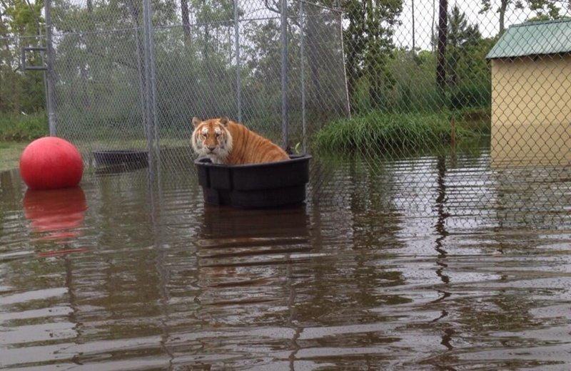 А каким вы запомнили ваш поход в зоопарк?