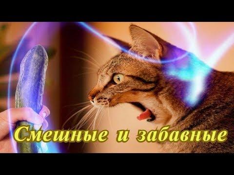 Прикольные кошки собаки Позитив Создай себе хорошее настроение