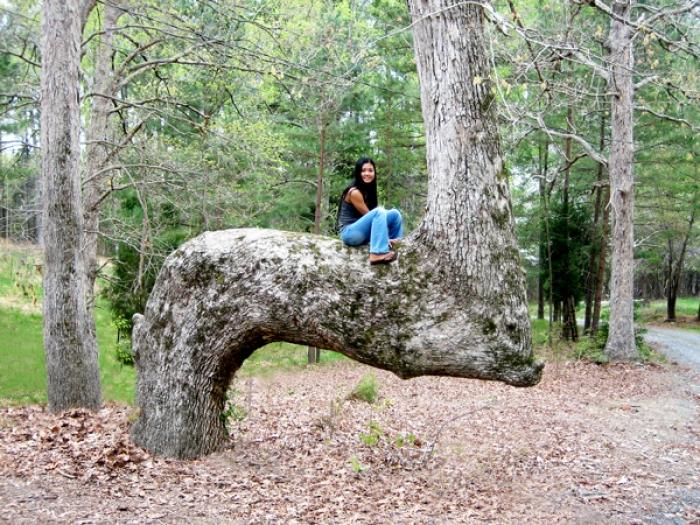 В заповеднике Ухари (Uwharrie), Северная Каролина. | Фото: ui.uncc.edu.