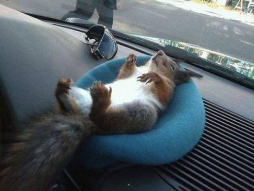 Отдых и комфорт — всё, что нам нужно! (23 фото)