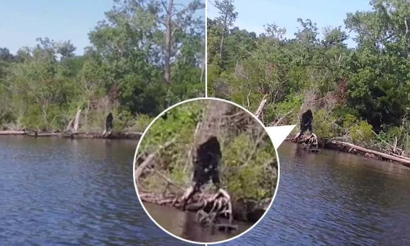 Йети в лесу вирусные фотографии, обман, фото, фотошоп
