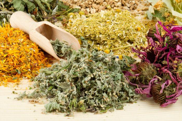 Семь лечебных растений для вашей дачи