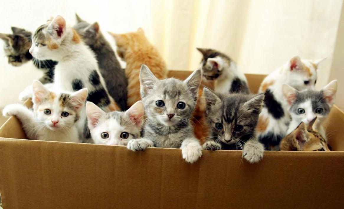 Котята на удачу)