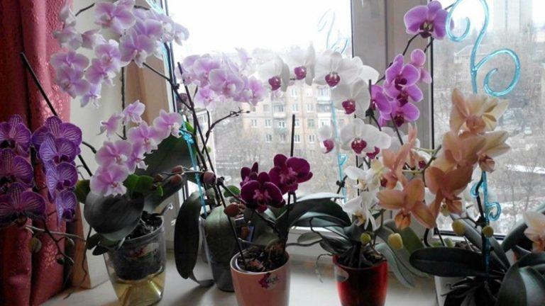 Девушки, никогда не держите дома орхидею! На работе — можно, но дома — ни в коем случае