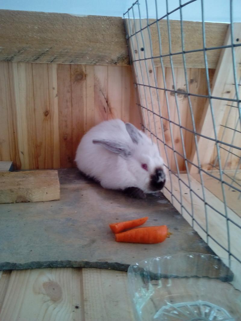 Снова о кроликах