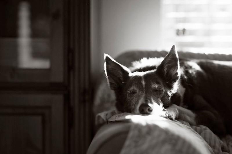 """1 место в категории """"Старички"""" - Джон Лиот, Великобритания Кеннел клаб, животные, конкурс, лондон, портрет, собаки, фото, фотография года"""