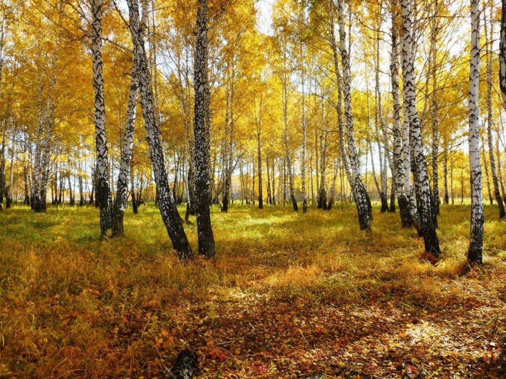 Буйство осени....... Об охотнике из золотого леса.....