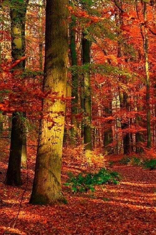 Ðа данном изображении может находитьÑÑ: дерево, раÑтение, на улице и природа