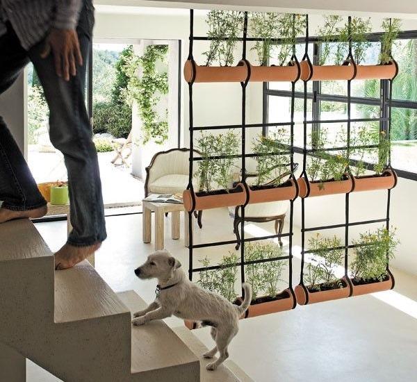 Красивая перегородка в дом из комнатных растений