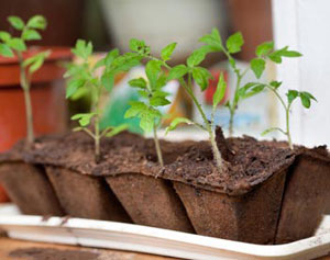 Весенние заботы садоводов и огородников