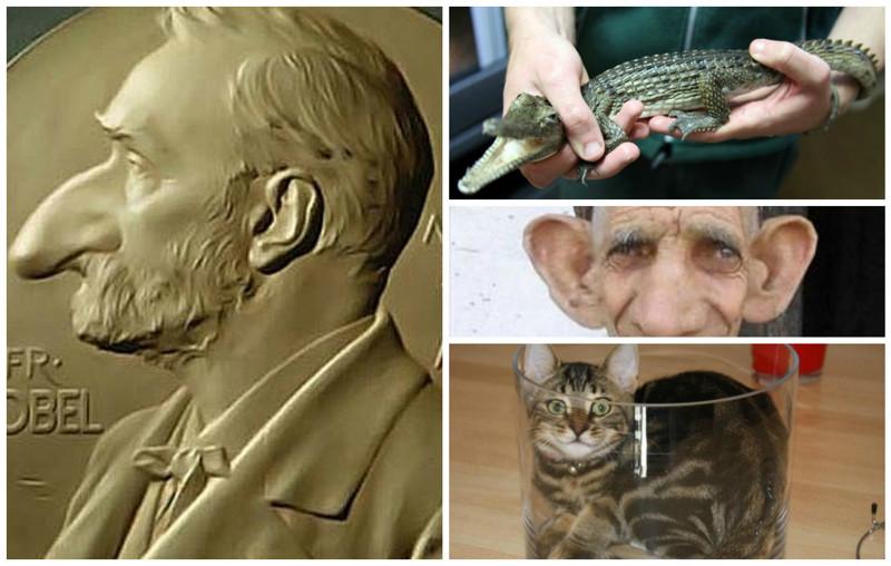 Жидкие коты и другие безобразия. Названы лауреаты Шнобелевской премии 2017