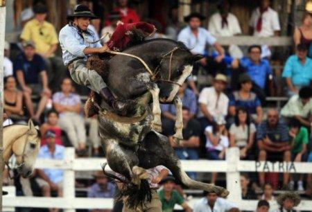 Укрощение необъезженных лошадей на ежегодном фестивале Патрия Гауча (Patria Gaucha)