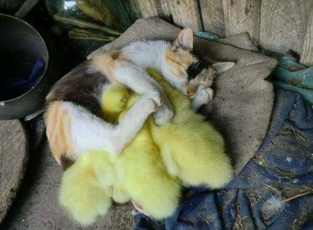 Наши любимые котики!