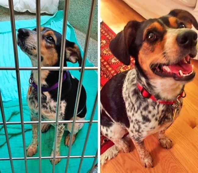 Фото собак до и после приюта…