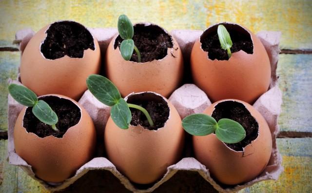 7 необычных способов выращивания рассады