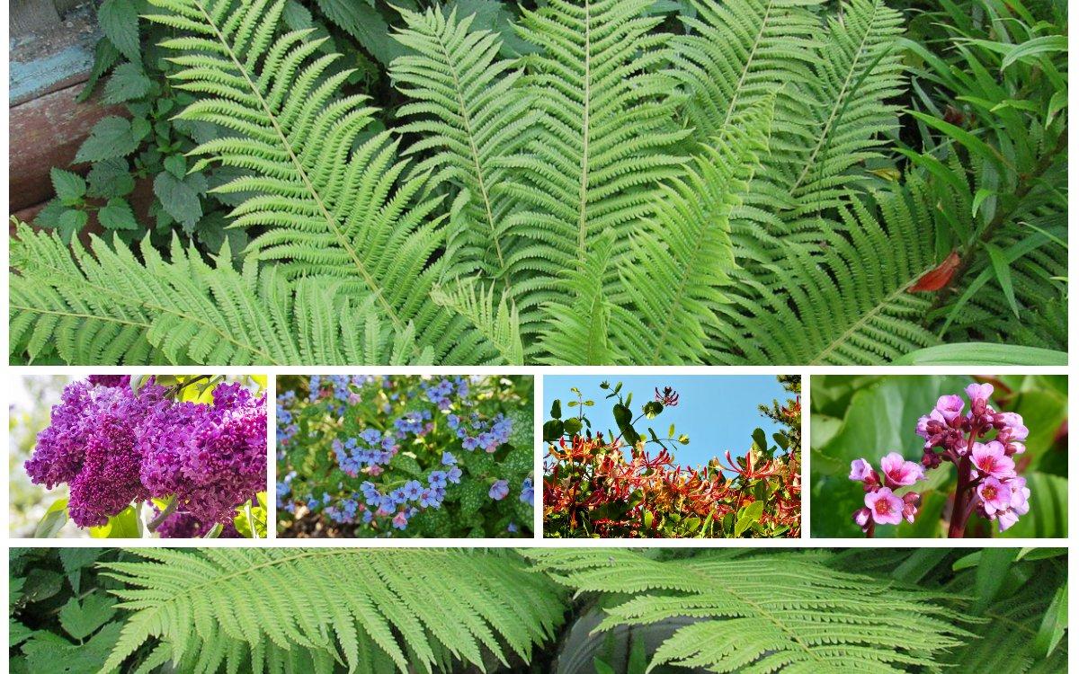 12 очаровательных растений для глинистой почвы