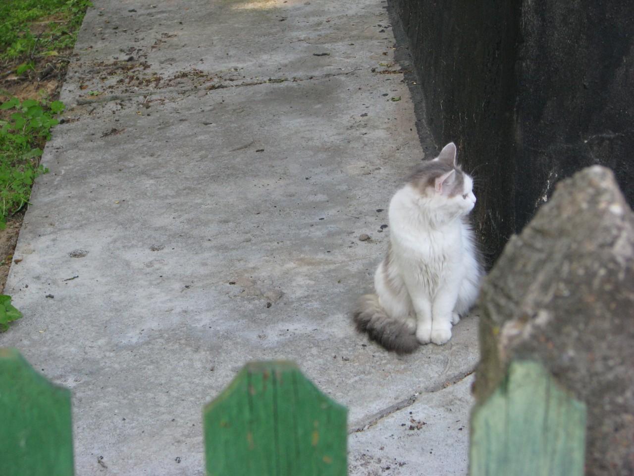 Братья наши меньшие: вот такой кошкин дом