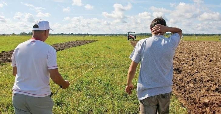 В России возвращено в сельскохозяйственный оборот 650 тыс. га залежных земель