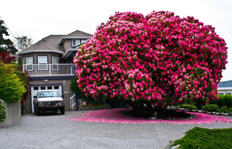 Цветочное дерево с фото