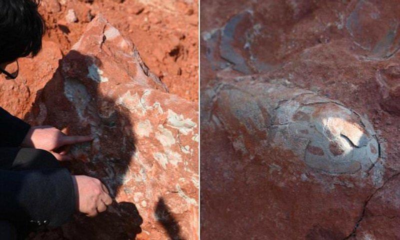 В Китае нашли яйца динозавров возрастом 130 миллионов лет