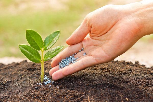Биокомплекс БТУ - лучшее микробиологическое удобрение для огорода и сада.