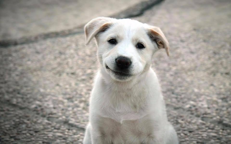 Собаки не говорят