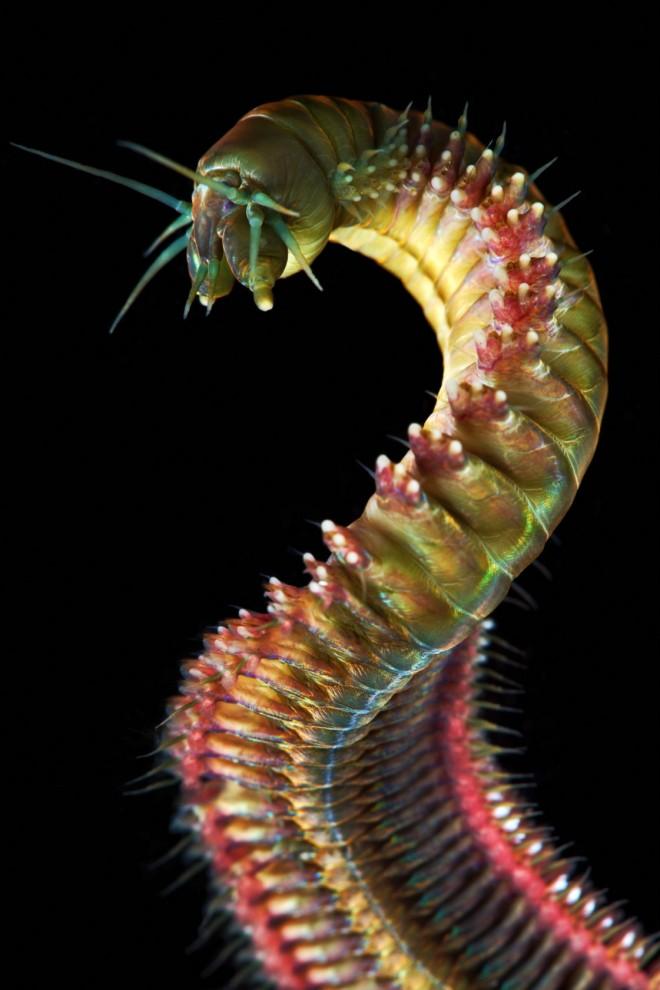 Semyonov24 Морские организмы на фотографиях Александра Семёнова