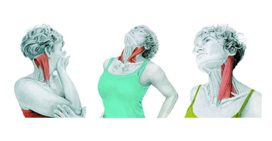 10 упражнений на растяжку: как мышцы тянутся на самом деле