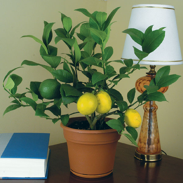 Человек и растение — единый организм