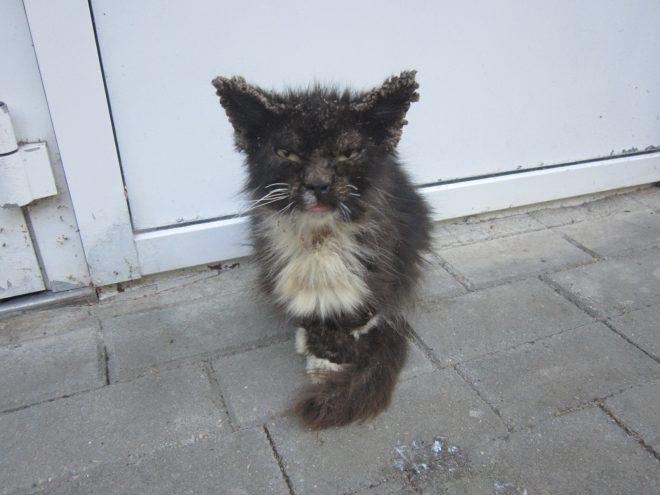 Реальная история! Больной котенок не дождался спасения и ушел…