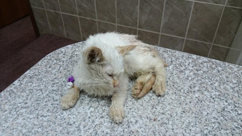 Спасение котенка и что из этого вышло