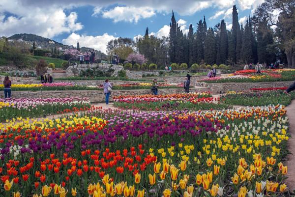 Тринадцатый парад тюльпанов …