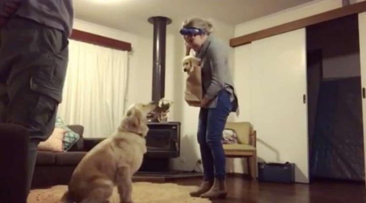 Реакция собаки на нового щенка