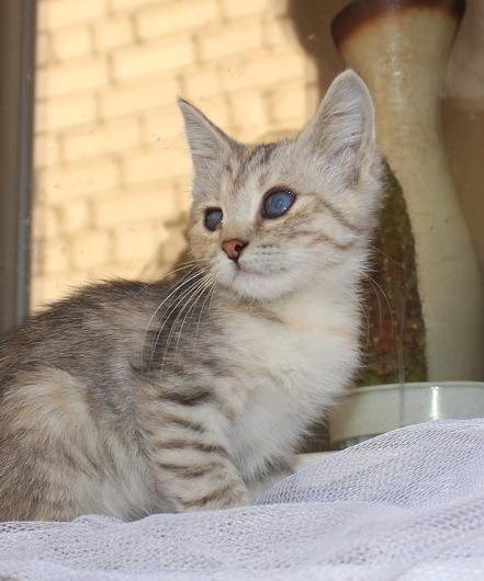 Особенный котенок Эля ищет дом