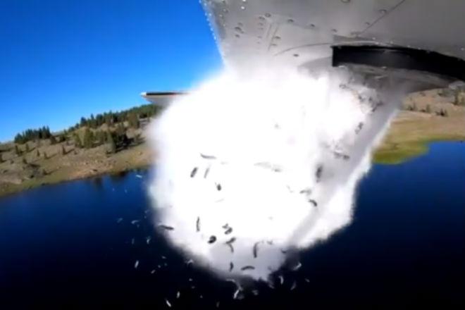 Рыбный дождь: невероятный способ выпустить рыбу в воду