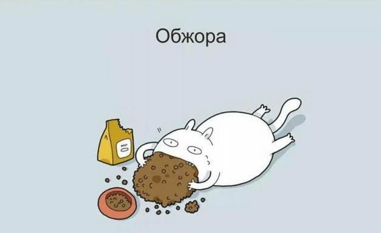 Классификация котов в угарных картинках