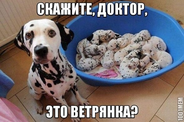 ПРИКОЛЬНЫЕ КАРТИНКИ С НАДПИСЯМИ .ЭДВАЙСЫ-47.