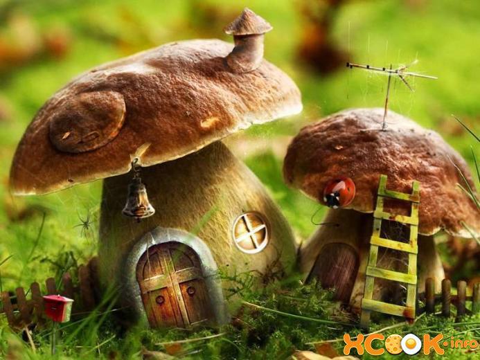 правильно искать грибы
