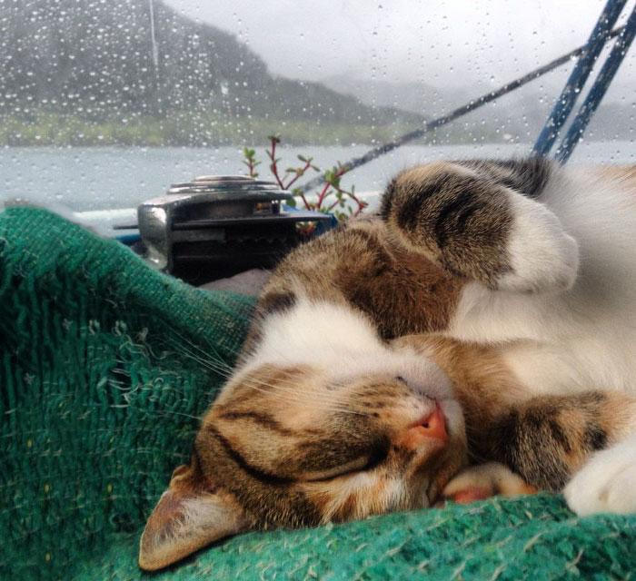 Кругосветное путешествие женщины и ее кошки